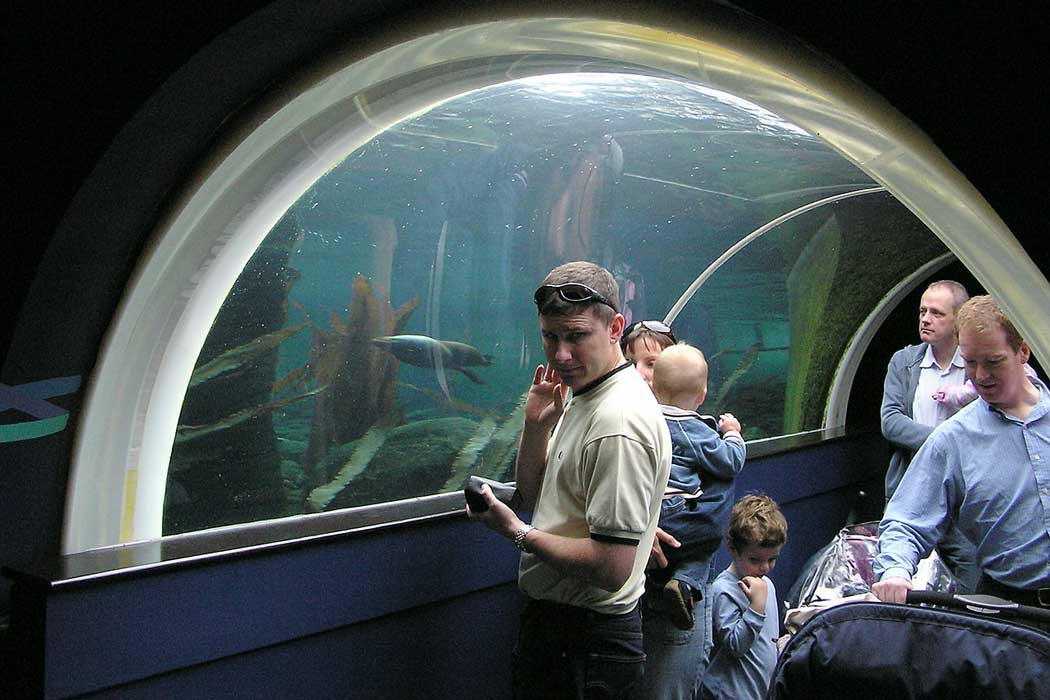 An underwater tunnel in the Seal and Penguin Coasts area of the Bristol Zoo lets you see South American fur seals in their natural habitat.