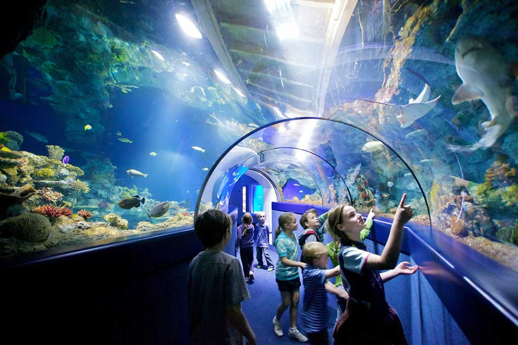 Bristol Aquarium has two walk-through tunnels where you can experience fish swimming above you. (Photo: Bristol Aquarium)